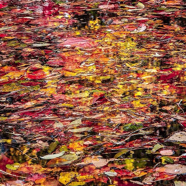 AbstractWaterLeaves
