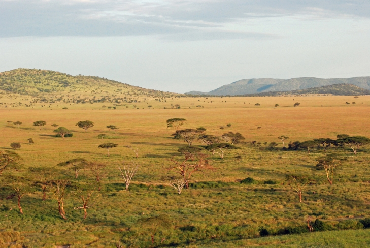 East Africa is more wide-open, and lets you see huge herds of animals during their migrations.